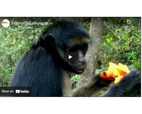 Esperanza y Alegremia. Video